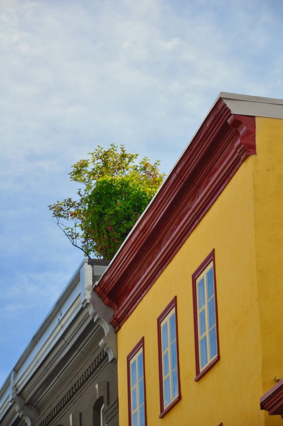 A pop of colour along the roof edge.