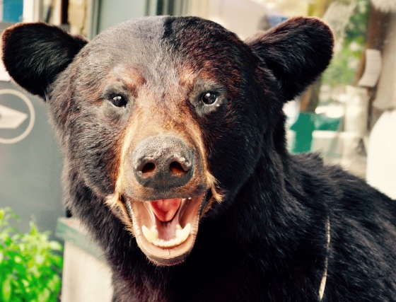 Rowr. Face-on shot of a stuffed bear.